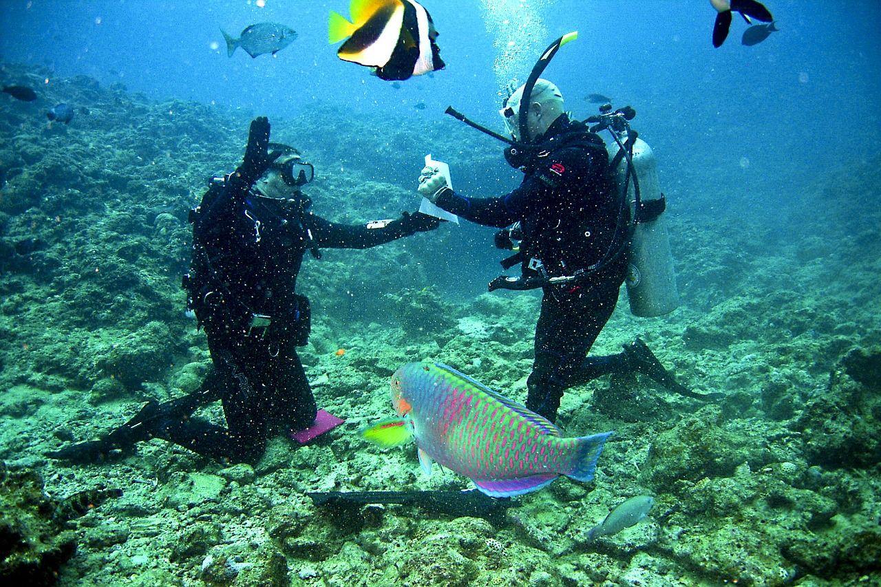 divers-plongee